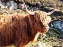 Een Hooglander, Schotland