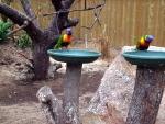 Vogeltjes in Emsflower, Duitsland