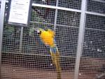 Papegaai in Emsflower, Duitsland