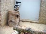 Eekhoornachtig diertje, Eifel-Zoo, Duitsland