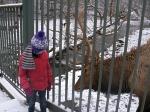 Nee, we mogen niet voeren, Eifel-Zoo, Duitsland