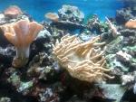Zee-aquarium Zella-Mehlis, Duitsland