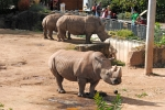 Thüringer dierentuin Erfurt, Duitsland