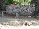 Hondje in Epidaurus, Griekenland
