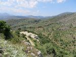 Olijfgaarden rond Mycene, Griekenland