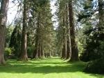De botanische tuin, Benmore, Schotland
