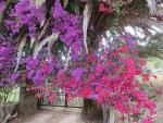 Bloeiende struiken op Korfoe, Griekenland