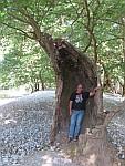 Holle boom bij Kleidonia, Griekenland