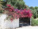 Bloemen in Lygia, Griekenland