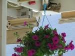 Bloemen en nest in Vasiliki, Griekenland