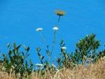 Bloemen bij de kaap van Lefkada, Griekenland