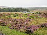 Heide ten zuiden van Dulsie, Schotland