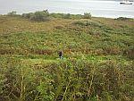 Langs de kust van Duart Bay, Schotland