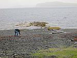 Schelpen zoeken langs Loch na Keal, Schotland