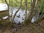 Wandelen bij Kildary Loch, Schotland