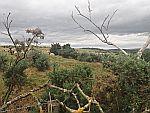 Schapen in de wei, in de buurt van Inverurie, Schotland