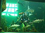 In het MacDuff zeeaquarium, Schotland