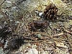 Een krab in het Dadiawoud, Griekenland