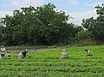 Arbeiders op het land, Thracië, Griekenland