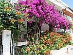 Kleurige bloemen in Sarti, Griekenland
