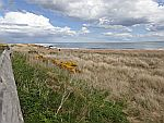 Het strand van Dornoch, Schotland