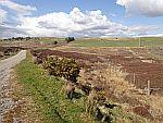 Heidelandschap bij Rogart in de Hooglanden, Schotland