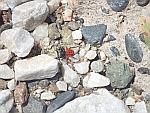Een kleurige spin tussen de rotsen, Griekenland