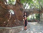 Poseren voor de oude plataan in Tsangarada, Griekenland