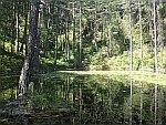 Het meer met de waterlelies, Greveniti, Griekenland