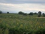 Zonnebloemvelden in Noord-Macedonië, Macedonie