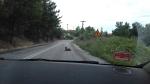 Hond op de weg, Boven Volos, Griekenland