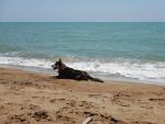 Onze bewaker op het strand, Griekenland