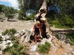 Holle boom bij het kasteel bij Sami, Griekenland