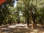 Bos bij het klooster in Pilaros, Kefalonië, Griekenland