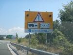 Beren op de weg, Ioannina ?�� Thessaloniki, Griekenland