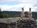 Griffioenen bij een landhuis, west van Ardgay, Schotland