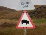 Oppassen voor varkens, Schotland