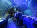 Onderwatertunnel in Deep Sea World, Queensferry, Schotland