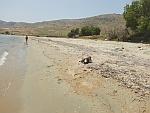 Een vervuild strand bij Karystos met een dode zeeschildpad, Griekenland
