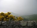 50 puzzels uit Schotland 2011